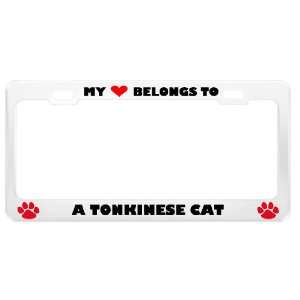 A Tonkinese Cat Pet White Metal License Plate Frame Tag