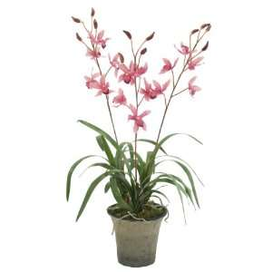 FAB Flowers Pink Mini Cymbidium Orchid in Oyster Terracotta, 15 Inched