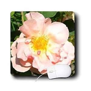 Patricia Sanders Flowers   Pretty Light Peach Rose Flower