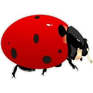 Ladybug Beetle Lady Cow Car Bumper Sticker Decal 5x3.5