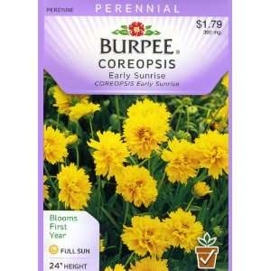 Burpee 43620 Coreopsis Early Sunrise Seed Packet Patio
